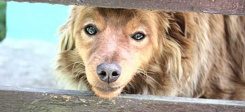 unser dackel bedroht andere hunde